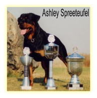 Ashley Spreeteufel